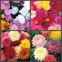 Цветы (0)
