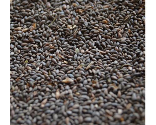 Семена ели европейской